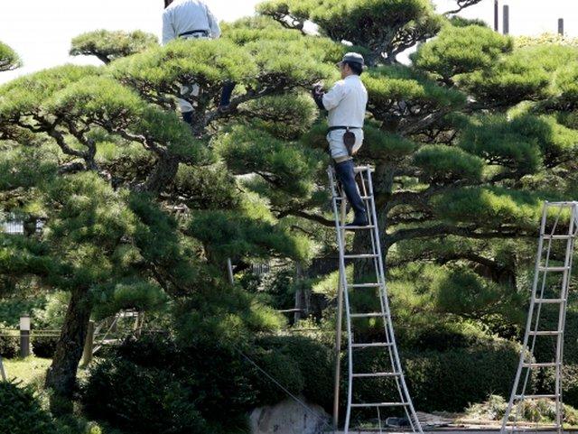 旦那は県外を飛び回る庭師(イメージ)